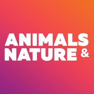 Animals_Nature