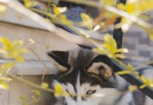Canineparadiseth