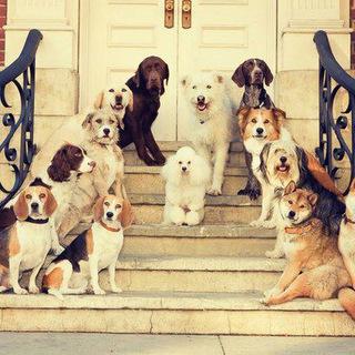 Dog_World