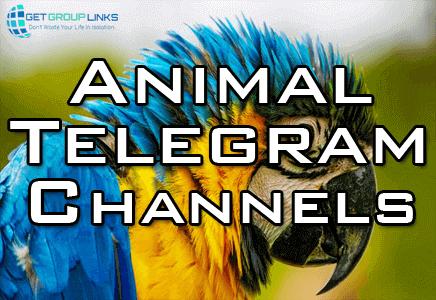 Animal Telegram Channel