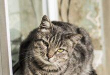 cat_tube
