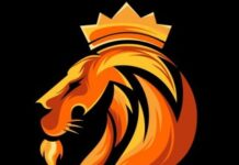 lionandanimals