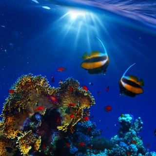livingocean