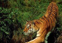 wildlifen