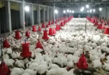 A S POULTRY TRADERS