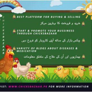 Chicks Bazaar