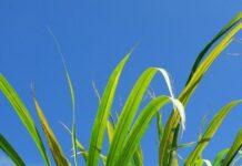 Crops information