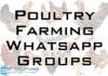 poultry farming whatsapp group link