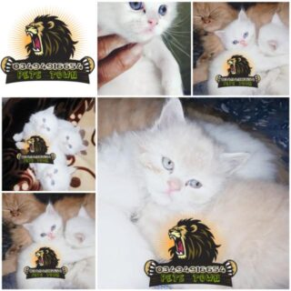 All Kittens Birds Available