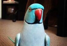 All Pakistan Birds