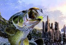 BASS FISHING AT ITS BEST