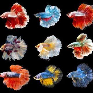 Betta Fish World