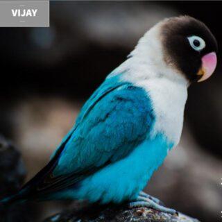 COIMBATORE Birds