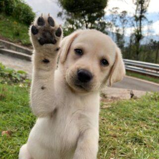 Dog Buy Sell Adopt Chennai