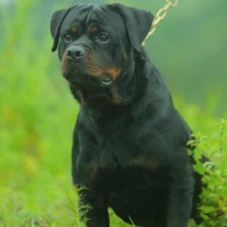 Dog Lovers of Kerala
