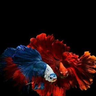 FISH KEEPING WORLD