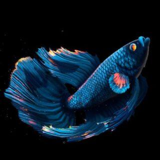 FISH VALARTHAL