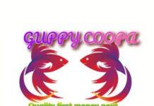 Guppy coopa Fish Farm