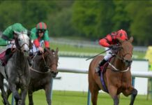Horse Racing Lays