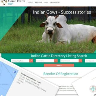 Indian Cattle
