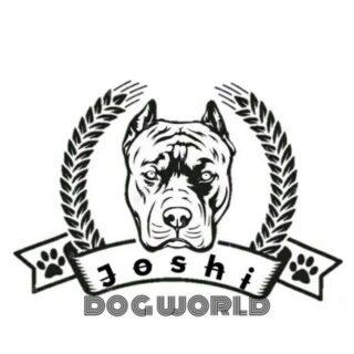 JOSHI DOG WORLD YT CHANNE