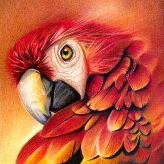 Karachi Birds Society