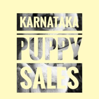 Karnataka Puppy Sales