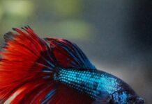 Kerala Pet Fishes Sales