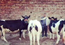 Khera Satti Dairy
