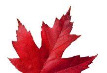 Mechanical Engineers Canada Network