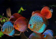 Mumbai Fish Buy Sell