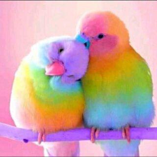 Pakistan Birds Sale
