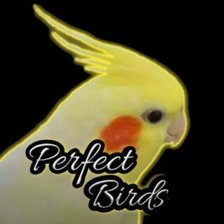 Perfect Birds