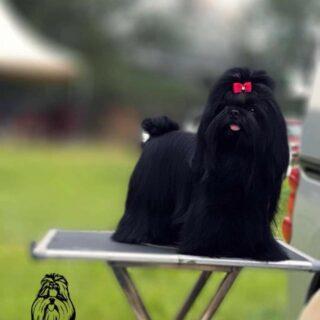 Thrissur Dog Breeders