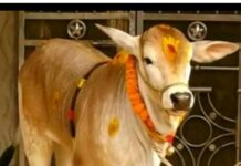 VARI Cow Sell And Buy
