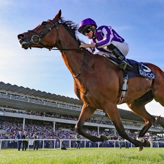 Winning Filly's Horse Racing