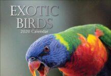 bbsr-bird-sell-purchase