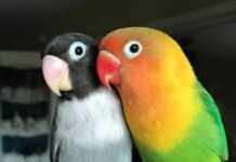 birds-lover-buy-sale
