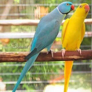 birds-lovers