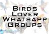 birds whatsapp group link