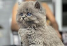 pet-sale-and-care-adoptions