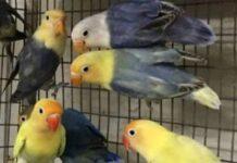 sargodha-birds