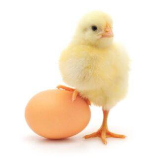 Avian Veterinarian