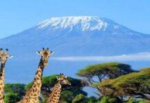 mt-kilimanjaro-fam-tour
