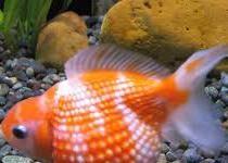 Aquarium Zone