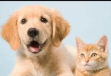 pets-world