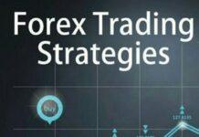 Management Forex