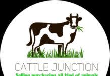 Cattle Junction